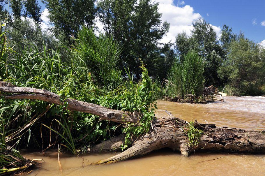 tronco en el rio