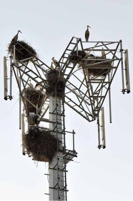 cigüeña en la torre